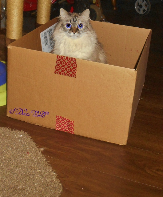 Dezi sitting in box