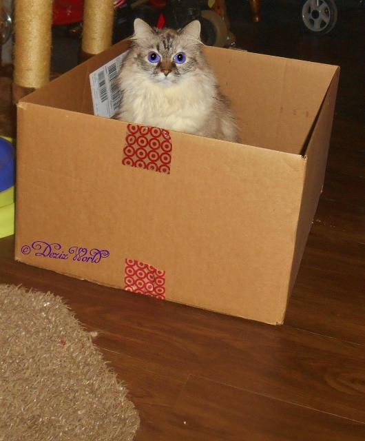 Dezi sitting in box
