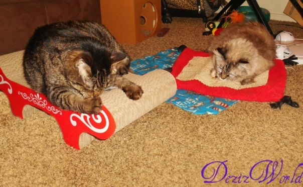 Lexi and Dezi lay on scratchers