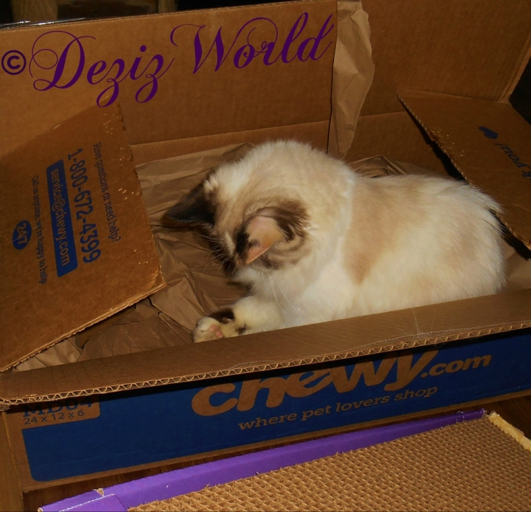 Raena plays with the packing paper in a chewy box