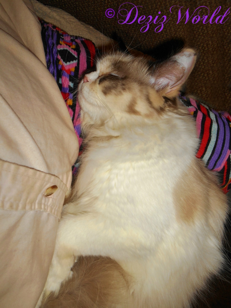 Raena sleeps in mommys lap