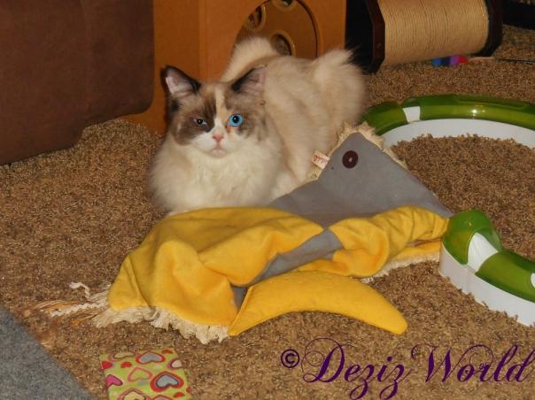 Raena laying on nip mat