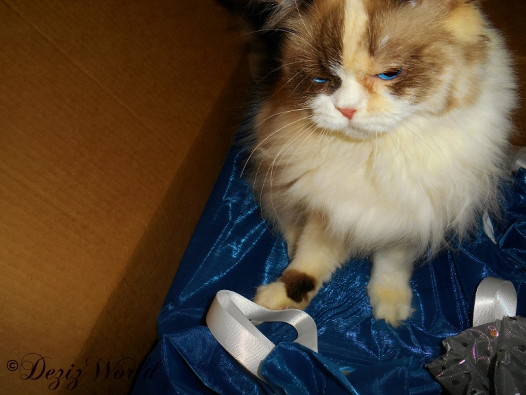 Raena sits in a box of Christmas gifts