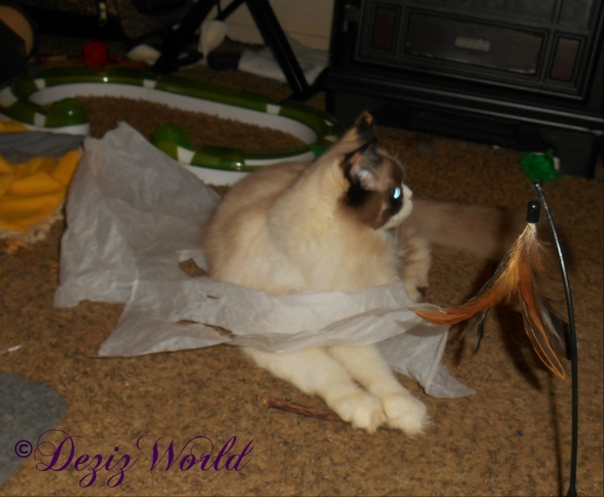 Raena plays in the gift bag paper