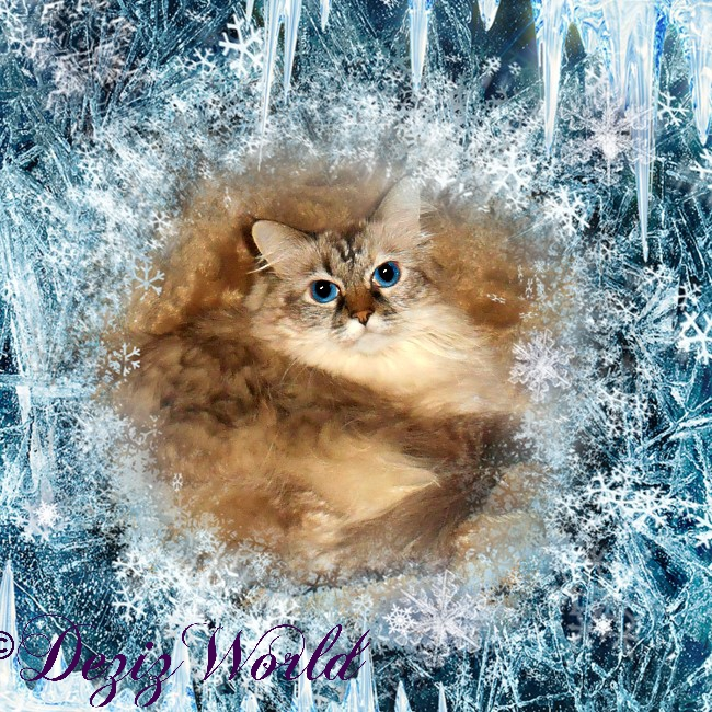 Dezi in an icy winter frame