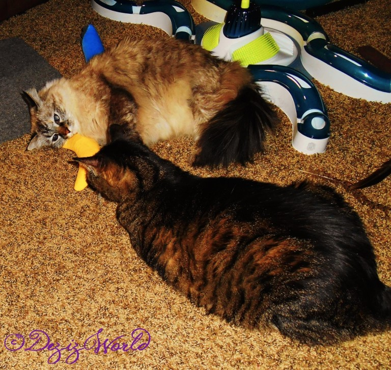 Dezi and Lexi playing together with the nip nanner