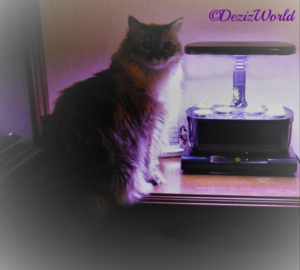 Dezi sitting beside the AeroGarden