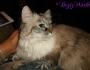 Chatting Cats: Lap Hogs andForgetfulness