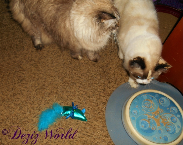 Dezi and Raena with nip toy