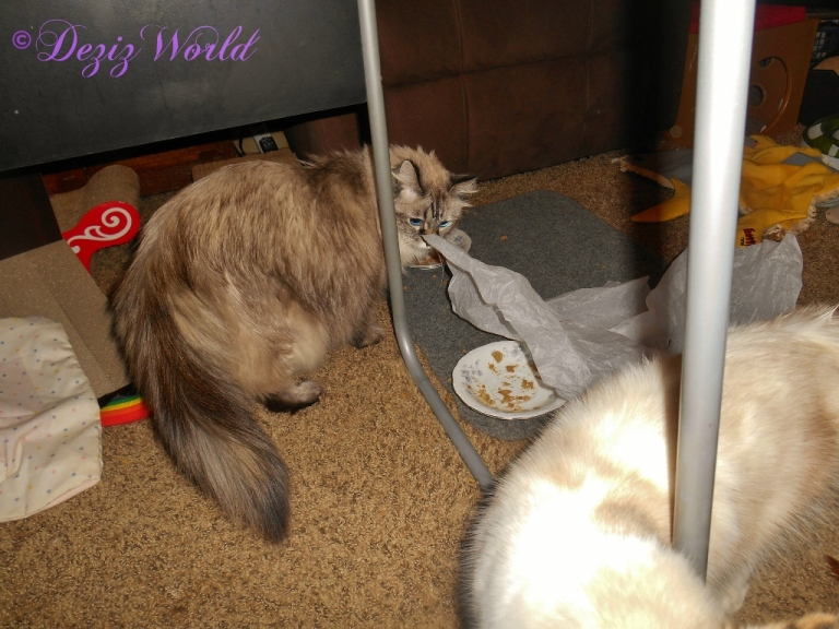 Dezi looks up from her breakfast plate and over at Raena