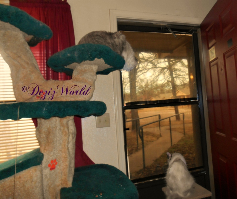 Dezi and Raena look outside from their perches near the door.