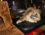 Service Cats: When To Train: Before or After aMeal