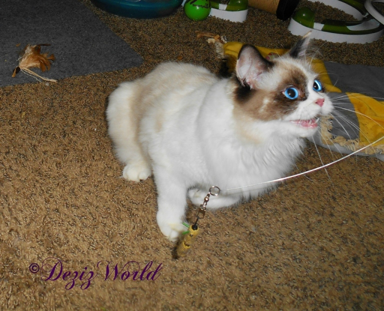 Raena plays hunt, catch, kill with the wand toy