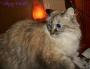Chatting Cats: Raena Has A Virtual PlayDate