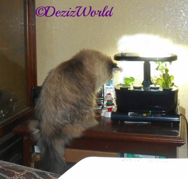 Dezi checks out the AeroGarden,