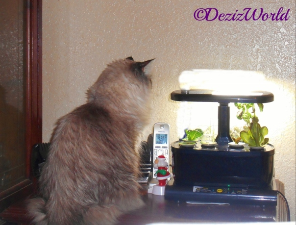 Dezi checks out the AeroGarden