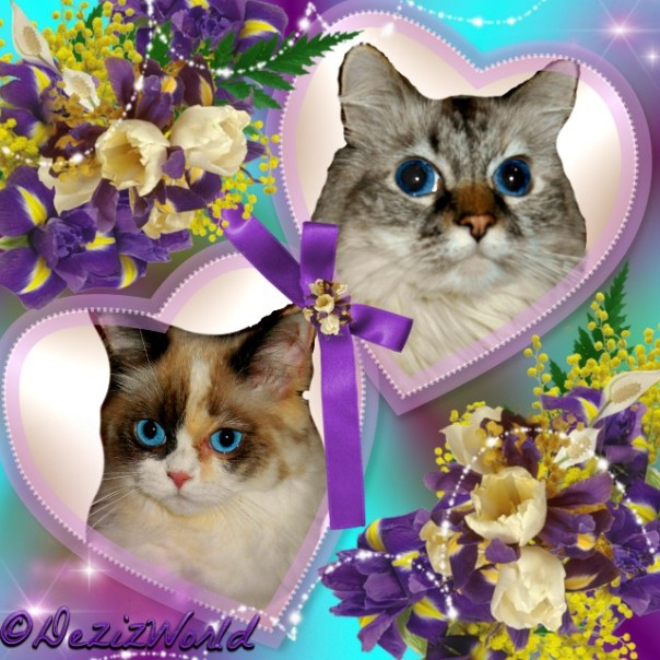 Dezi and Raena in hearts frame with purple and cream flowers.
