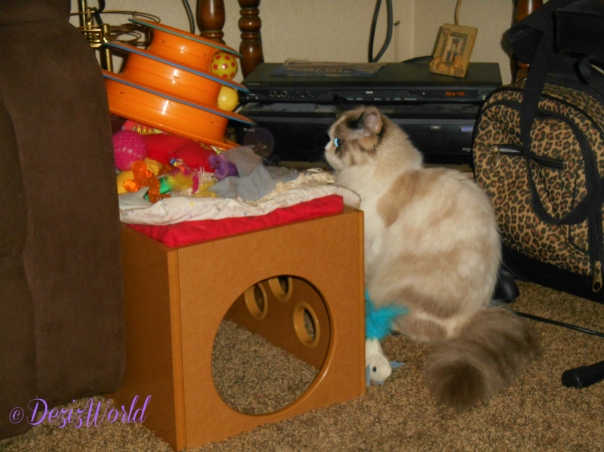 Raena checks out her toys while stacked up