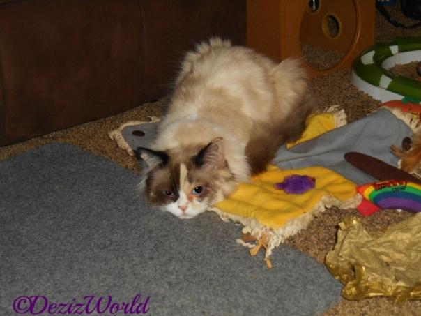 Raena lays on the nip mat