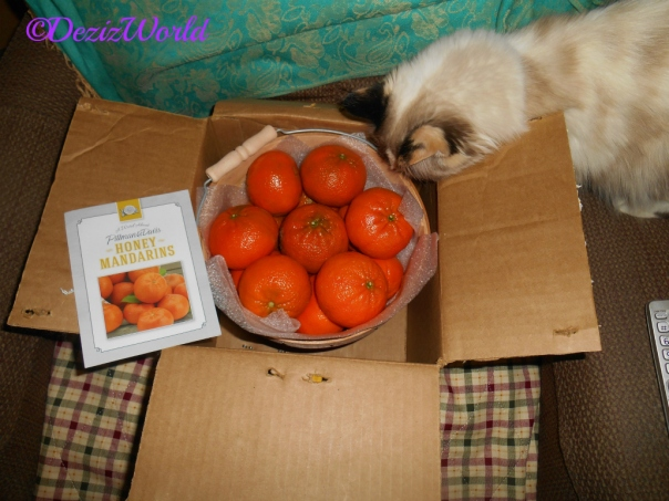 Raena checks ou the bucket of mandarins from LouLou
