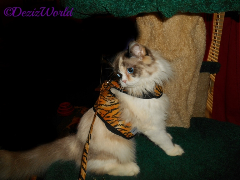 Raena in tiger kitty holster