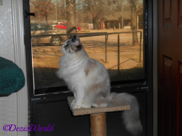 Raena sits on perch at door and looks up