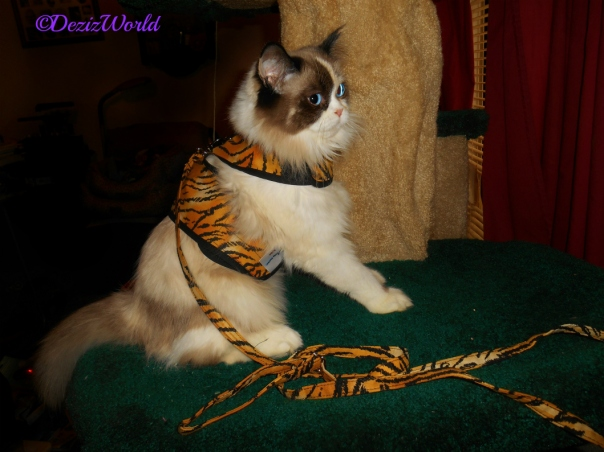 Raena poses on the Liberty cat tree in her tiger harness