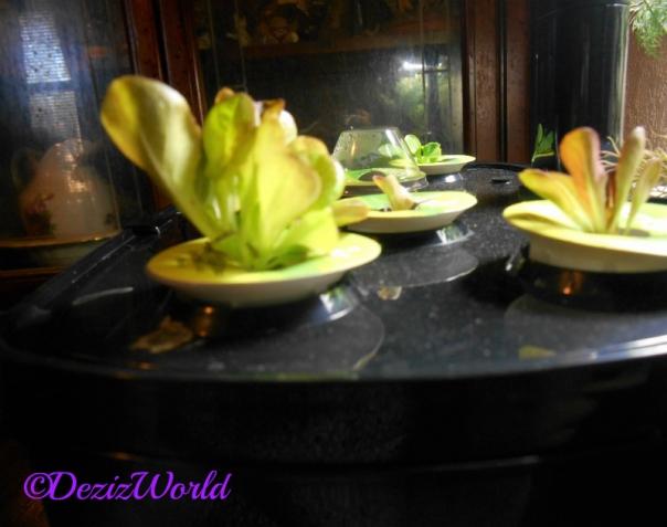 Lettuce growing from AeroGarden