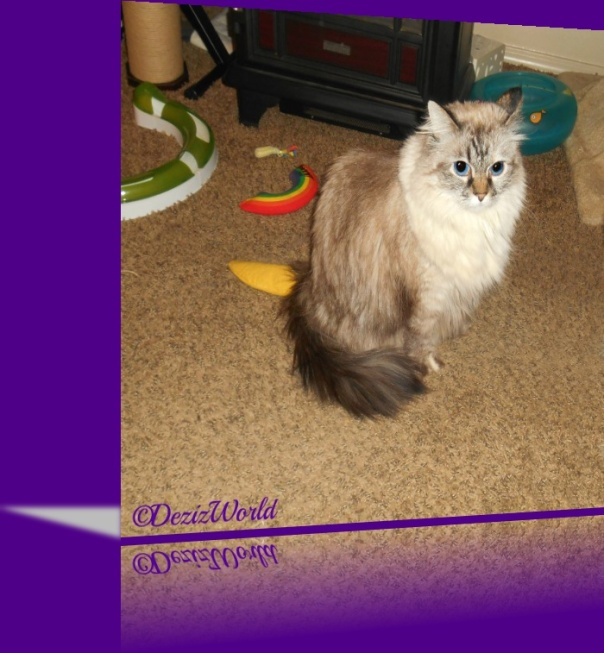 Dezi sits and poses in a reflection frame of purple and gray