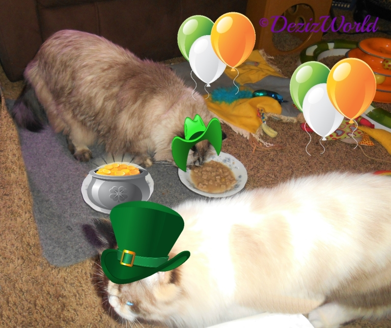 Dezi tries Taste of the wild and Raena photobombs her while wearing an irish hat with balloons and a pot pf gold