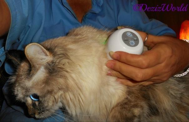 Dezi gets a LumaSoothe treatment