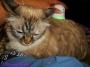 Chatting Cats: Brighter DaysAhead