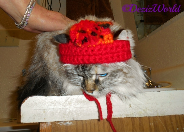 Dezi lays on the vanity while wearing the bobble hat