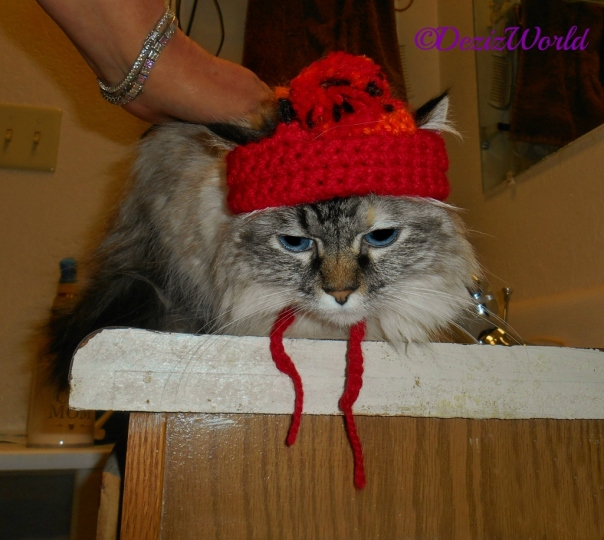Dezi lays on the vanity while wearing the time traveling bobble hat