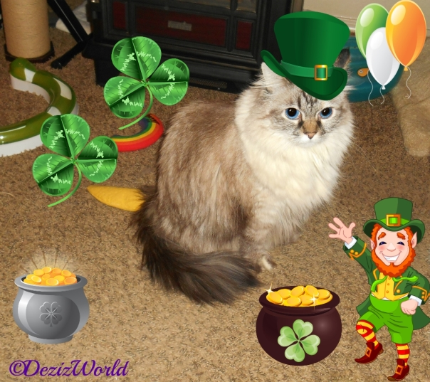 Dezi wearing a green irish hat with a leprechaun, 2 pots of gold and clovers