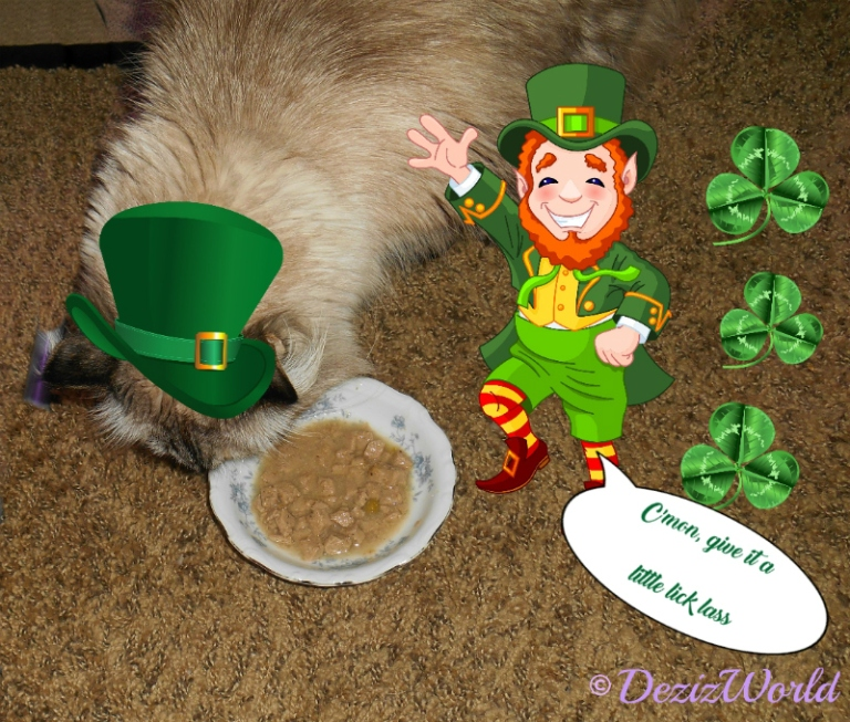 Dezi checks out her food while a leprechaun pets her