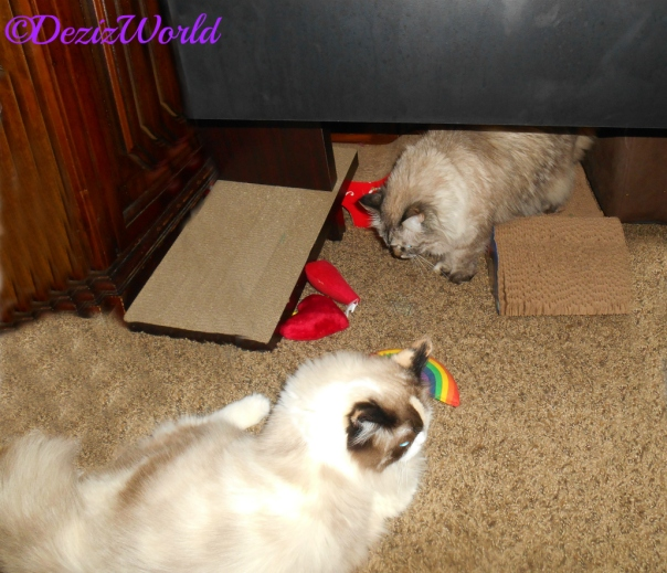 Dezi and Raena checking out Yeowww toys