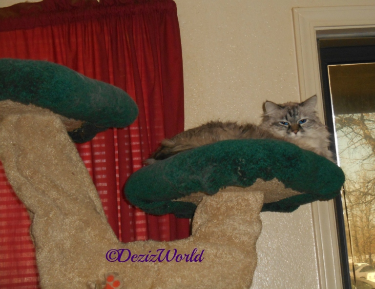 Dezi lays on the Liberty Cat Tree