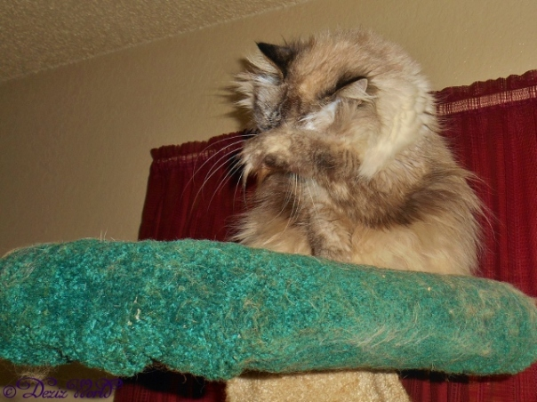 Dezi wipes her eyes atop the Liberty cat tree