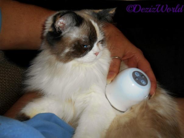 Raena getting a LumaSoothe treatment
