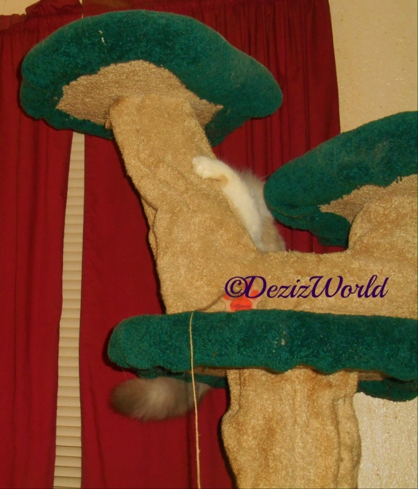Raena hides behind the Liberty cat tree