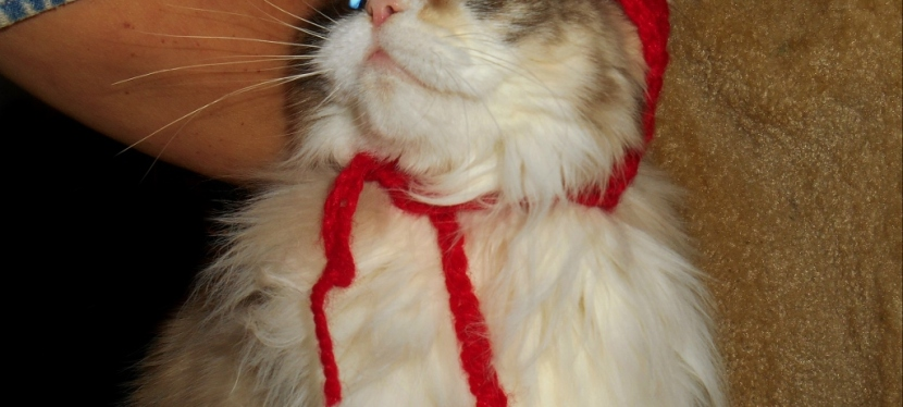 Chatting Cats: The Bobble Hat Saga