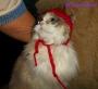 Chatting Cats: The Bobble HatSaga