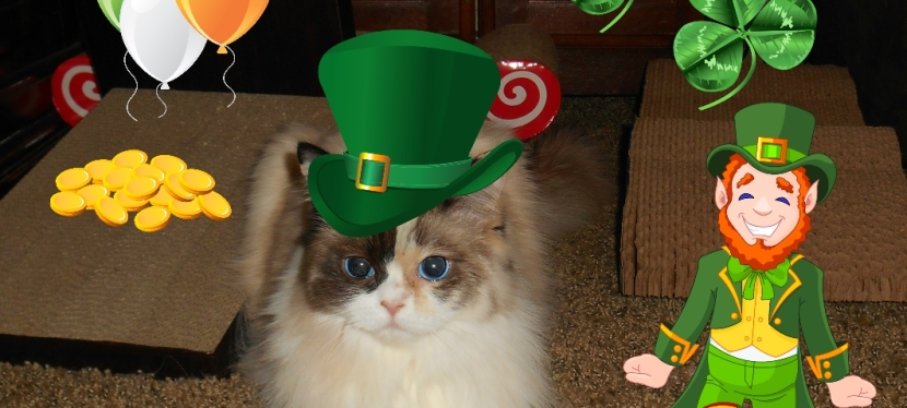 It's a Wild St. Pat's #ChewyInfluencer