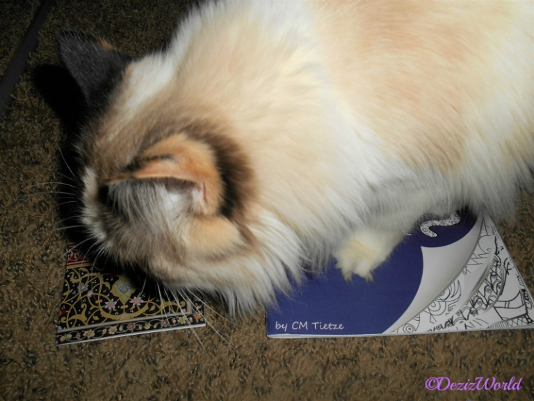 Raena sniffs card from Dash Kitten while standing on the coloring book