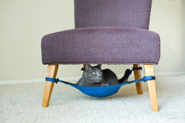 Cat in under the chair hammock