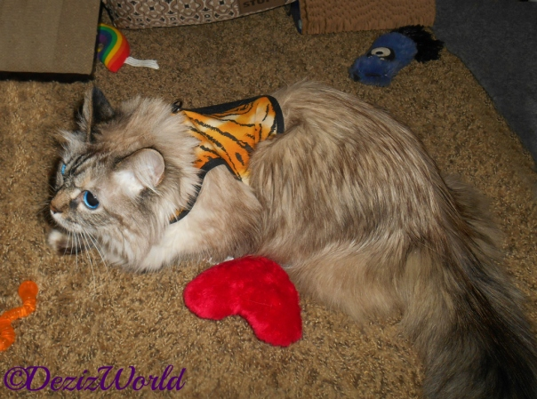 Dezi lays in tiger harness