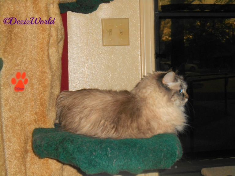 Dezi lays on Liberty tree and looks out the front door