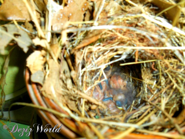Bird nest with babies