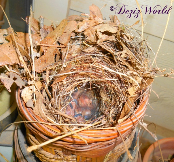 Bird's nest with baby birds